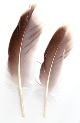 Natural Gray Goose feather