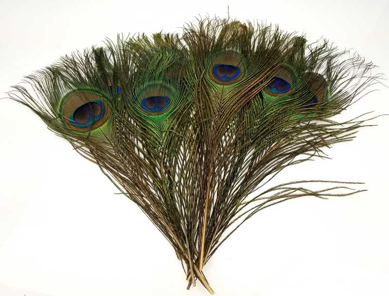 RFPEA10 Peacock feather (pk of 10)